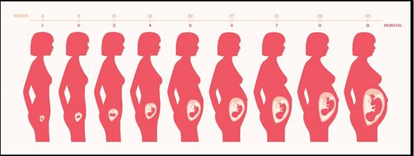 Mujer y fases de la gestación